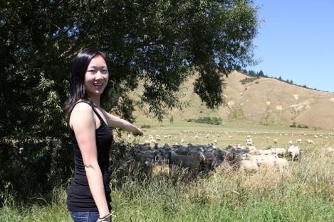 J_Sheep_IMG_7231