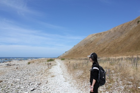 Path_Kaikoura_IMG_7619
