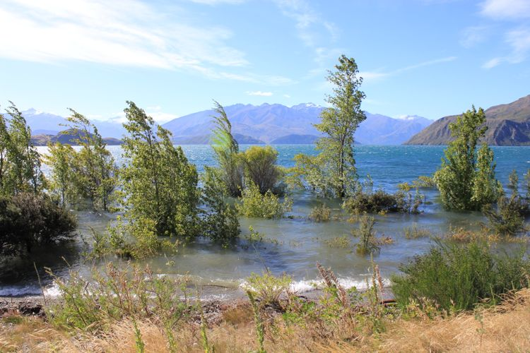 how to get from queesntown to wanaka