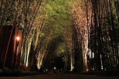 I love bamboo... so nice