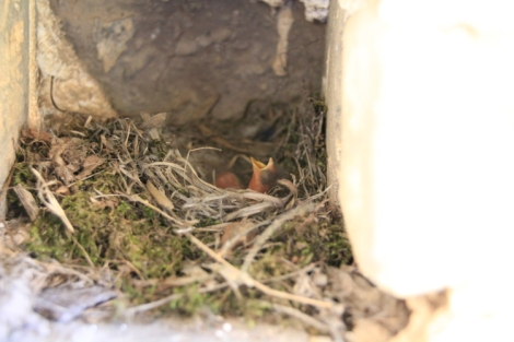 Found a bird nest in the cracks of the Wall!